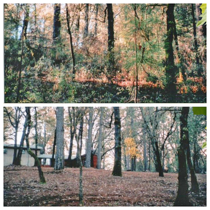 All Phase Land Clearing Before and After