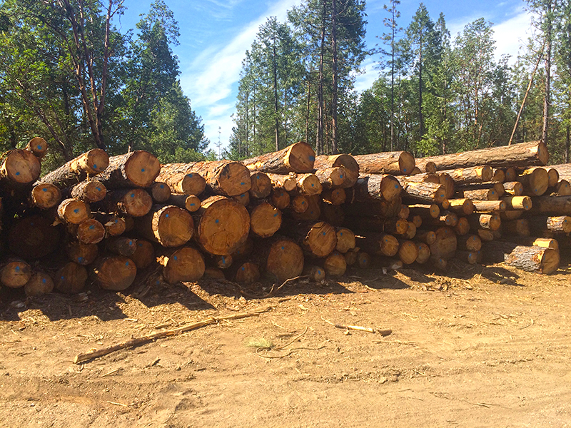 Logging - All Phase Land Clearing