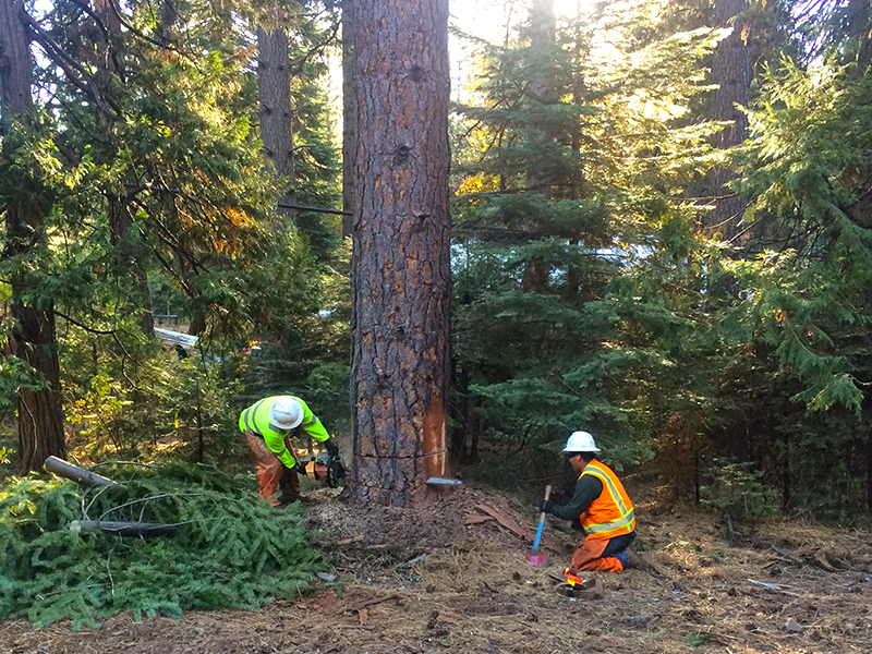 All Phase Land Clearing Tree Service
